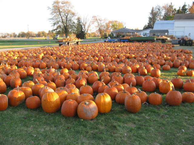 Johnson's Giant Pumpkins