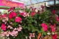 Abele Greenhouse & Garden Center