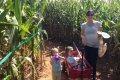 Frankenmuth Corn Maze